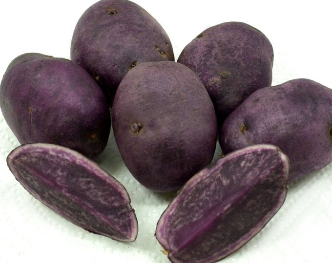 All Blue Seed Potatoes Certified Organic and Virus Free 2 Lbs. - Spring Shipping Non-GMO