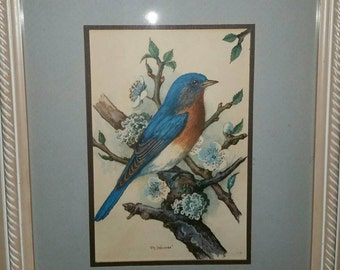 Vintage framed print of bluebird