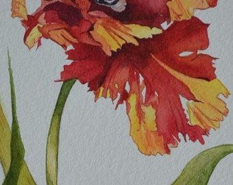 Parrot Tulip Botanical Portrait Print