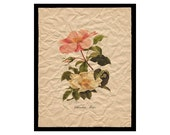 Cherokee Rose - Flower Artwork - Floral Art Print - 8x10 Print  - Vintage Cottage Style Decor