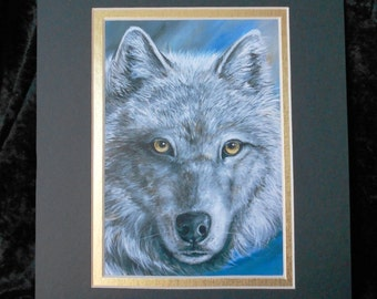 Gold Wolf - A majestic white Wolf with eyes of gold