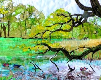 Cannop Ponds Forest of Dean Lake Trees Scene Manderin duck woodland forest
