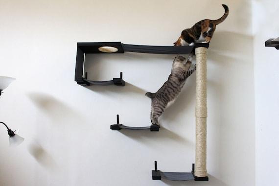 Cat Sky Track