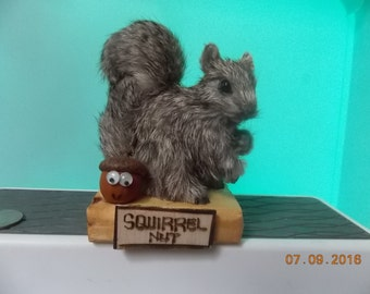 "Squirrel Nut - What are you ""Nuts"" about?"