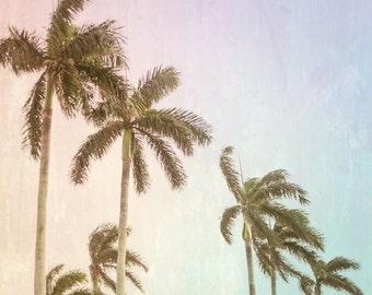 Palm Tree Photography, Palm Beach, Rainbow Coastal Chic Vintage Print FineArt Original Color 8x12 11x1 Large Wall Art Canvas Home Decor