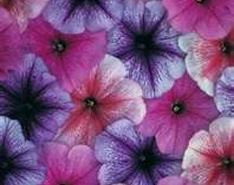 Petunias- Veigned Mix- 100 seeds each pack