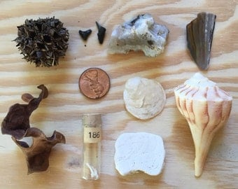 Natural Curio Collection; Miniature Curiosities and Oddities