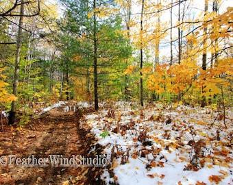Woodland Trails Etsy