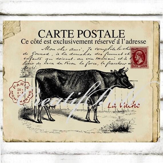 vintage french carte postale cow antique postcard large. Black Bedroom Furniture Sets. Home Design Ideas