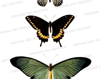 Butterfly Collage Digital Download Illustration - No.3503