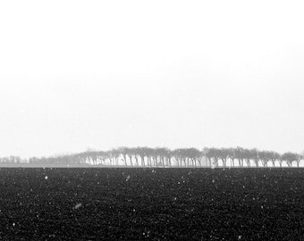 Travel Photography, Germany, Fehmarn, Black and White Fine Art Photography, Landscape, Snowstorm, Fog, Bare Trees, Wall Art, Home Decor