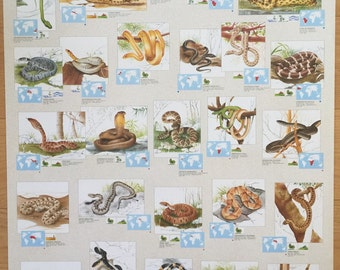Hobby Poster Chart Snakes Of The World Poster 27 x 39 made in Italy