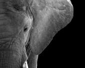 African Elephant Fine Art Animal Photography, Modern Home Decor, Wall Art