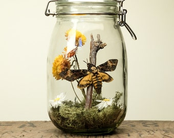 Glass Jar Terrarium Kit with Death Head Moth
