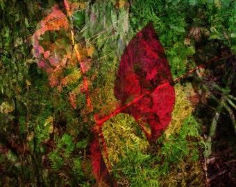 A Forest Secret print