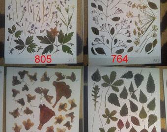 Pressed leaves, pressed petals, pressed plants, oshibana supplies. #805 #764 #754 #725