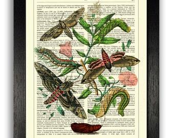 WALL ART Bohemian Moths Print, Vintage Wall Decor Poster, Insect Illustration Print, Home Decor, Office Artwork, Small Poster, Botanical Art