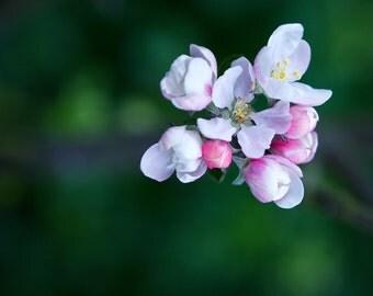 Blossom,Wall Art,Art Deco,Nature Print,Room Decor,Nature,Art,Print,Flower Print,Flower,Green