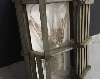 Rare Lobster Taxidermy inside custom Crate with Wall Mounting Bracket - Nautical Rustic Beach House - Ready to Hang