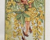 Flower Fairies THE LABURNUM FAIRY Vintage Print c1930 by Cicely Mary Barker