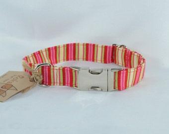 Fruity Stripes Metal Buckle Collar - Medium - Ready to Ship