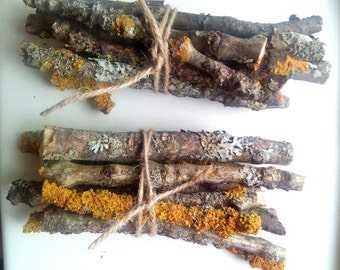 Cut Twigs for craft, natural wood sticks with moss, natural supplies