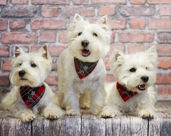 Image result for perro con bandana