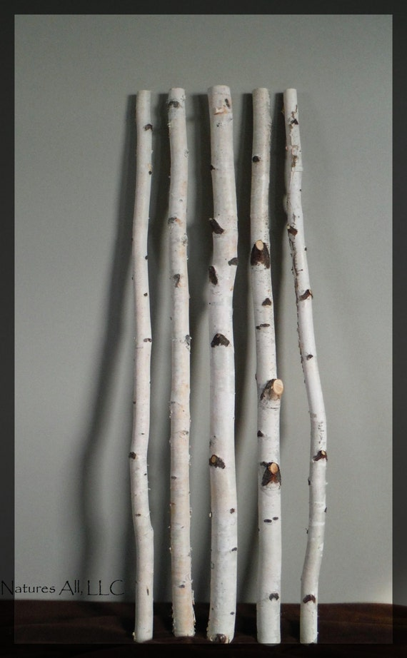 Decorative White Birch/White Birch Sticks 5 PC/3 by NaturesAllLLC