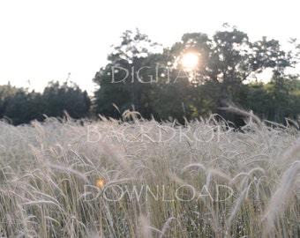 Wheat Field Digital Backdrop (Instant Download)