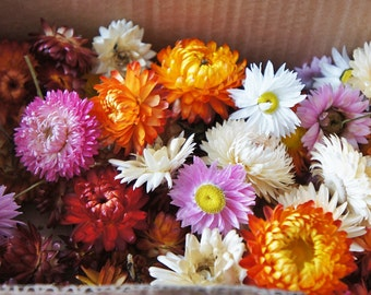 100 - 500 or more dried strawflower head, Preserved Helichrysum flower for decoration, fragrances flower, potpourri, mixed size