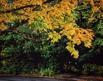 Nature Photography, Autumn Leaves, Autumn Forest, Autumn Tree, Fall, Road in Autumn, Wall Art, Wall Decor, Orange, Yellow, Green, Home Decor