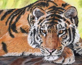 Resting Tiger Watercolor Colored Pencil Drawing Print