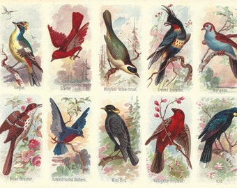 1895 Antique Bird Print Chromolithograph Original