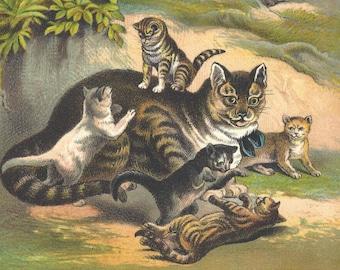 1880 Antique Cat Kittens Original Lithograph Book Plate