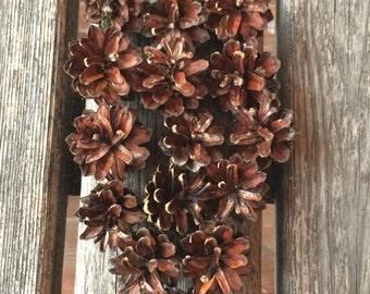 Natural Pine Cones, Pine Cones, Bulk Pine Cones, Wreath Supplies, Pine Cone for Home Decor