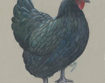 Chicken #1  - print