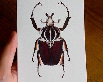 Goliathus goliatus - Greetings card