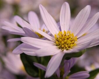 Pale Purple Flowers Photograph #68