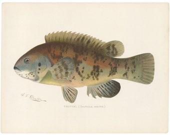 Blackfish Chromolithograph, C. 1900