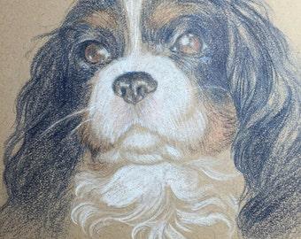 Custom Pet Portrait - Colored Pencil 8x10