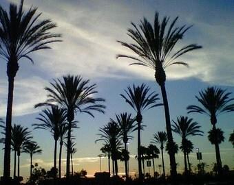 Sunsets, Aviation, Jets, Prague, Beach, Palm Trees, California Love