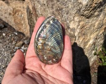 Abalone shell #2