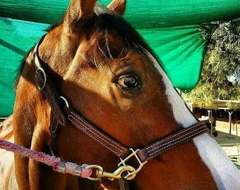 Handmade leather horse halter