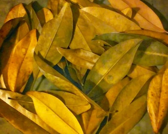 12 Dried Magnolia Leaves/ Natural Parchment/ Apothecary