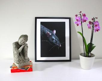 Portrait of a Rat - art print, pencil drawing, wall art, pet portrait, animal print