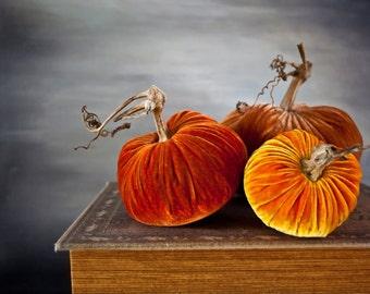 Velvet Pumpkins: Sunrise Collection