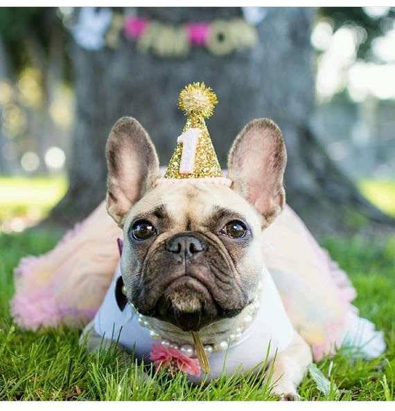 Dog Party Hat || Animal Birthday Party Hat || Pet Cat Kitty Dog Puppy Pig Birthday Party || Gold Glitter