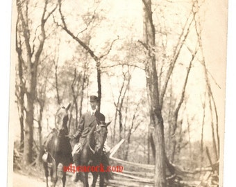 Vintage horse photo tall trees hunt sepia outdoor nature forest