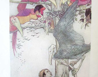 Vintage Fairy Tales from Many Lands Bookplate Illustration Print by Arthur Rackham, Battle of the Birds,  Fairy Tale Print
