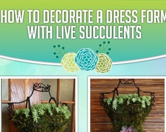 Tutorial: DIY Live Succulent